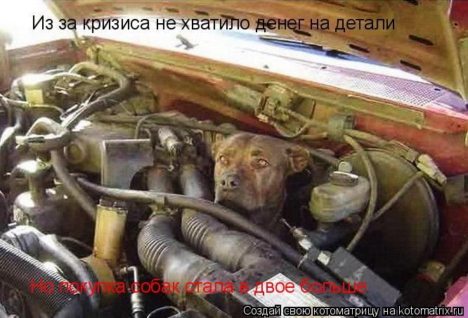 Котоматрица: Из за кризиса не хватило денег на детали Но покупка собак стала в двое больше