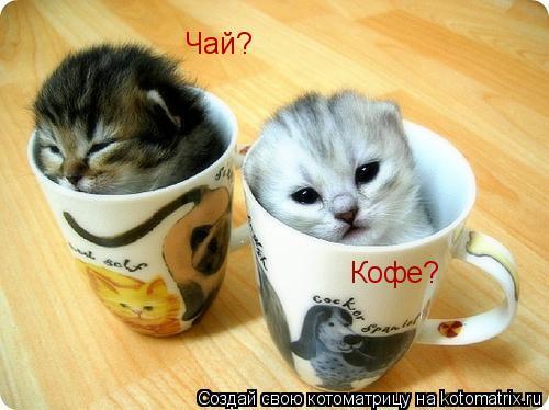 Котоматрица: Чай? Кофе?