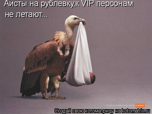 Котоматрица: Аисты на рублевку,к VIP персонам не летают...