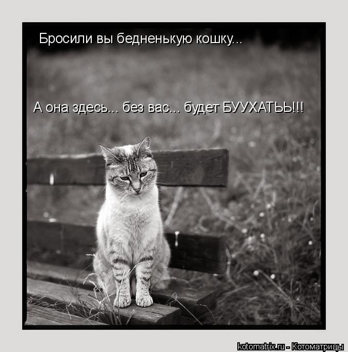 Котоматрица: Бросили вы бедненькую кошку... А она здесь... без вас... будет БУУХАТЬЬ!!!
