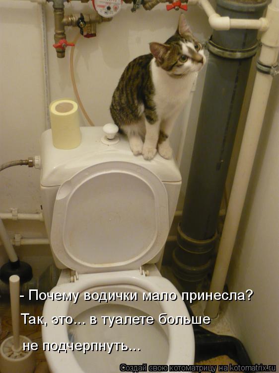 Котоматрица: - Почему водички мало принесла? Так, это... в туалете больше  не подчерпнуть...