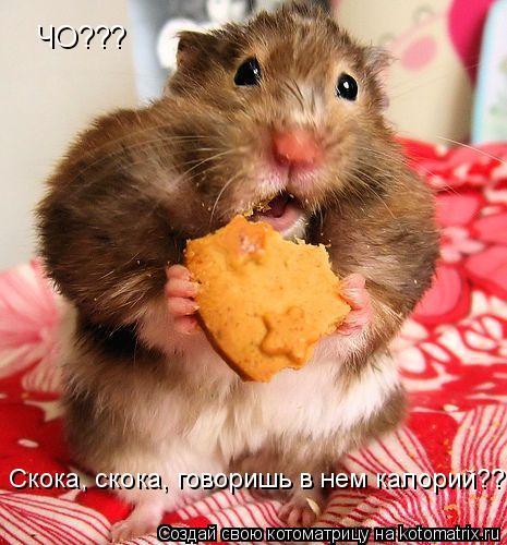 Котоматрица: ЧО??? Скока, скока, говоришь в нем калорий???