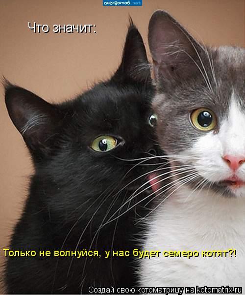 Котоматрица: Что значит: Только не волнуйся, у нас будет семеро котят?!