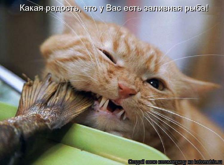 Котоматрица: Какая радость, что у Вас есть заливная рыба!