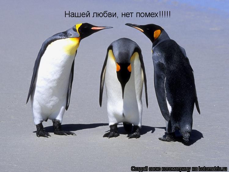Котоматрица: Нашей любви, нет помех!!!!!