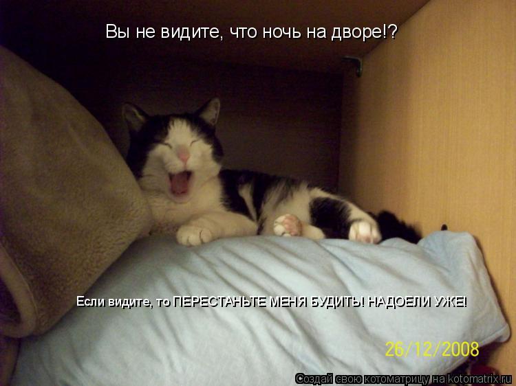 Котоматрица: Вы не видите, что ночь на дворе!?  Если видите, то ПЕРЕСТАНЬТЕ МЕНЯ БУДИТЬ! НАДОЕЛИ УЖЕ!