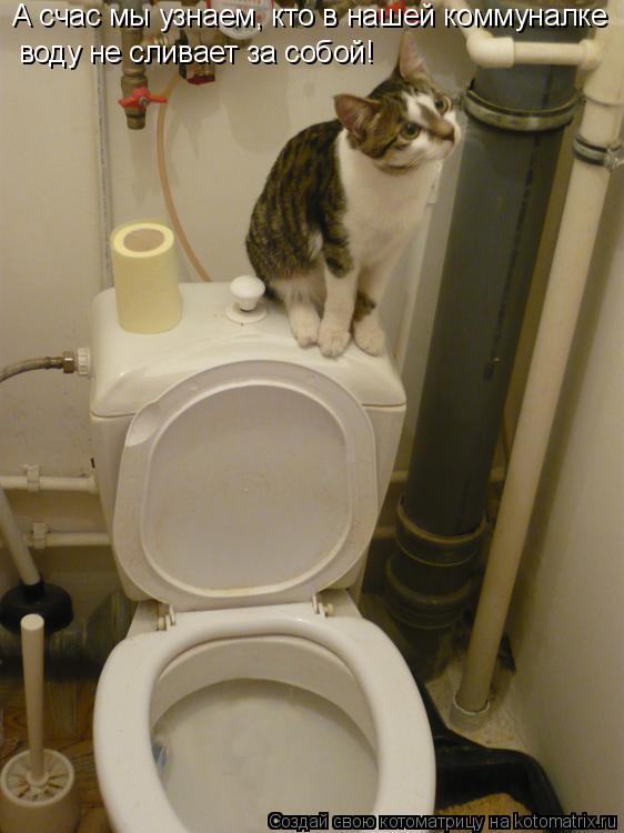 Котоматрица: А счас мы узнаем, кто в нашей коммуналке воду не сливает за собой!