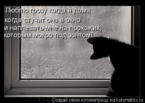 Котоматрица: Люблю грозу когда я дома, когда стучит она в окно и наплевать мне на прохожих, которым мокро под зонтом!