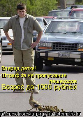 Котоматрица: Вперед детки! Штраф за не пропускание  пешеходов Возрос до 1000 рублей