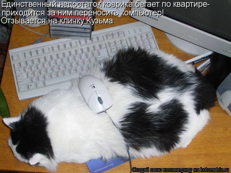 Котоматрица: приходится за ним переносить компьютер! Единственный недостаток коврика:бегает по квартире- Отзывается на кличку Кузьма