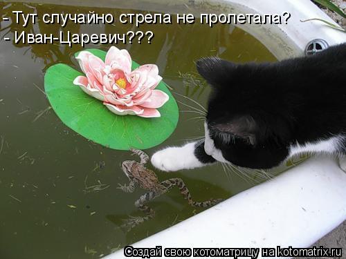 Котоматрица: - Тут случайно стрела не пролетала? - Иван-Царевич???