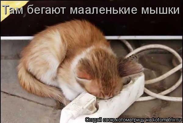 Котоматрица: Там бегают мааленькие мышки