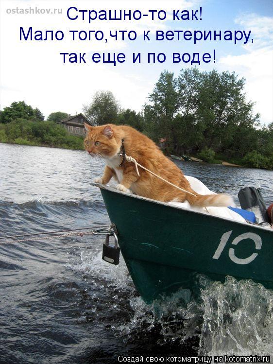Котоматрица: Страшно-то как! Мало того,что к ветеринару, так еще и по воде!