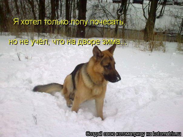 Котоматрица: Я хотел только попу почесать, но не учёл, что на дворе зима...
