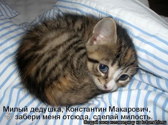 Котоматрица: Милый дедушка, Константин Макарович, забери меня отсюда, сделай милость.