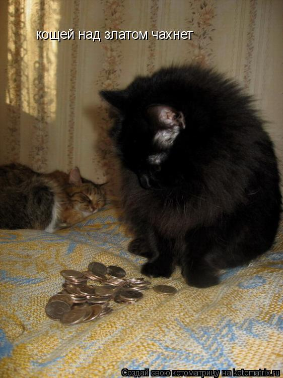 Котоматрица: кощей над златом чахнет