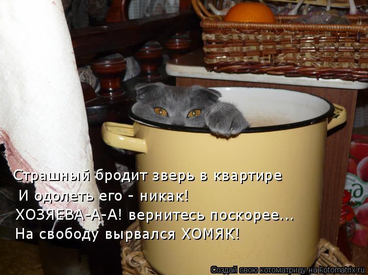 Котоматрица: Страшный бродит зверь в квартире  И одолеть его - никак! ХОЗЯЕВА-А-А! вернитесь поскорее... На свободу вырвался ХОМЯК!