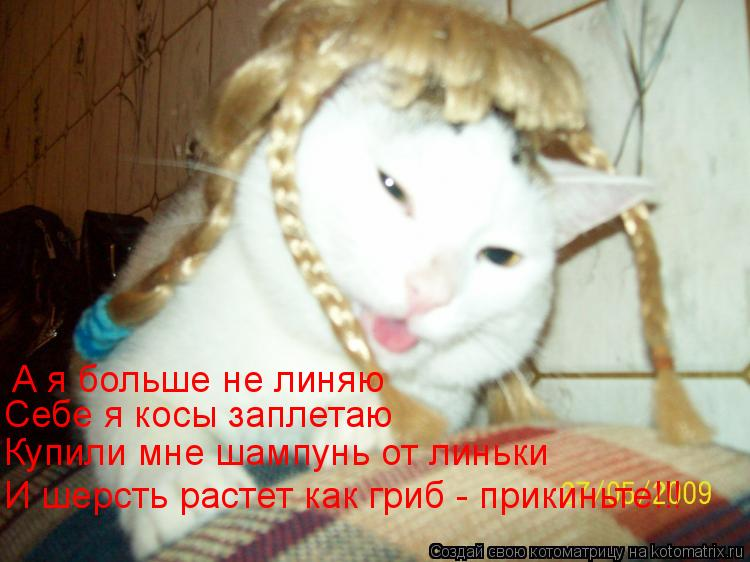 Котоматрица: А я больше не линяю Себе я косы заплетаю Купили мне шампунь от линьки И шерсть растет как гриб - прикиньте!!!