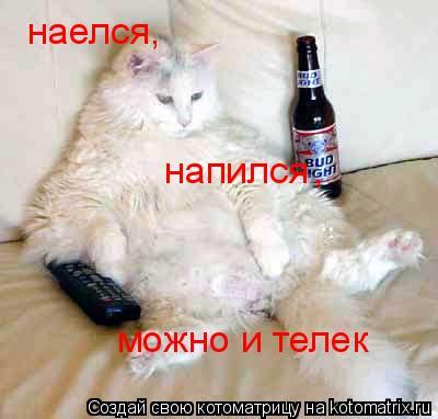 Котоматрица: наелся , напился , можно и телек