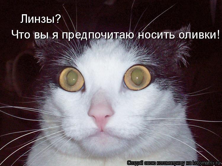 Котоматрица: Линзы?  Что вы я предпочитаю носить оливки!