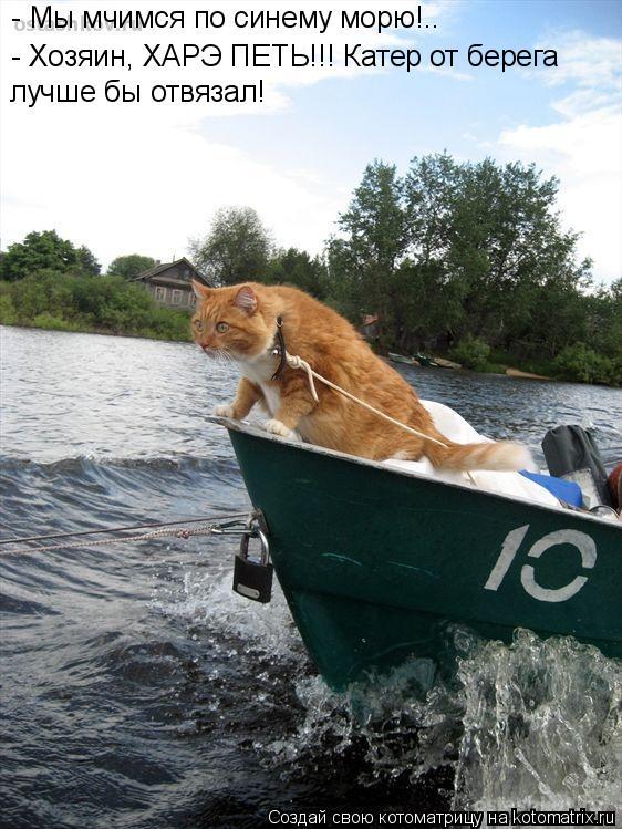 Котоматрица: - Мы мчимся по синему морю!.. - Хозяин, ХАРЭ ПЕТЬ!!! Катер от берега лучше бы отвязал!