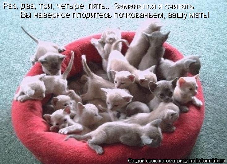 Котоматрица: Раз, два, три, четыре, пять.. Заманался я считать Вы наверное плодитесь почкованьем, вашу мать!