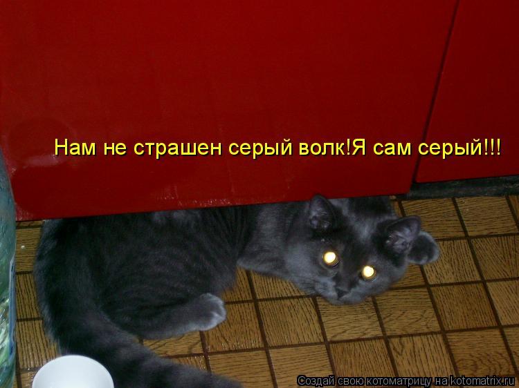 Котоматрица: Нам не страшен серый волк! Нам не страшен серый волк!Я сам серый!!!