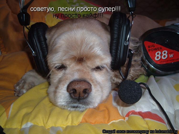 Котоматрица: советую, песни просто супер!!! ну просто кайф!!!