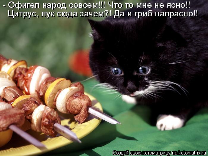 Котоматрица: - Офигел народ совсем!!! Что то мне не ясно!! Цитрус, лук сюда зачем?! Да и гриб напрасно!!