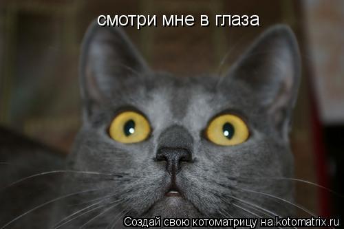 Котоматрица: смотри мне смотри мне в глаза
