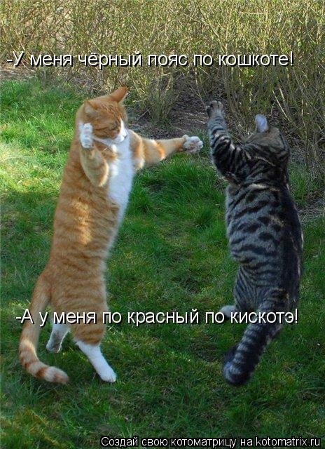 Котоматрица: -У меня чёрный пояс по кошкоте! -А у меня по красный по кискотэ! -А у меня по красный по кискотэ!