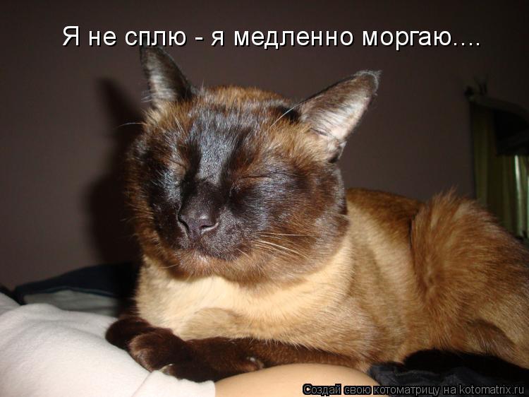 Котоматрица: Я не сплю - я медленно моргаю....