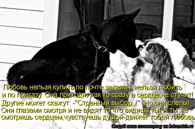 """Котоматрица: Любовь нельзя купить,по почте заказать,нельзя любить и по приказу. Она приходит как то сразу в сердце,не стучит! Другие может скажут: -""""Стран"""