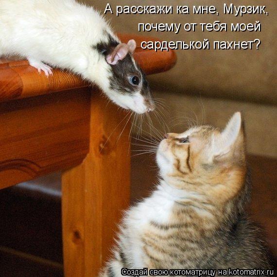 Котоматрица: А расскажи ка мне, Мурзик, почему от тебя моей сарделькой пахнет?