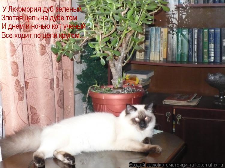 Котоматрица: У Лккомория дуб зеленый Злотая цепь на дубе том Все ходит по цепи кругом... И днем и ночью кот ученый