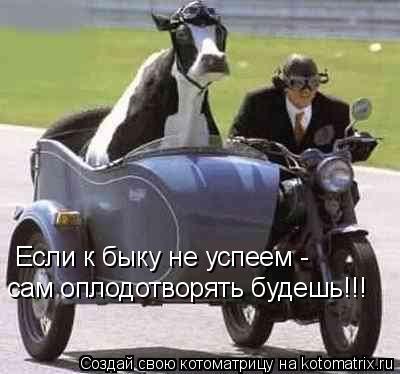 Котоматрица: Если к быку не успеем -  сам оплодотворять будешь!!!