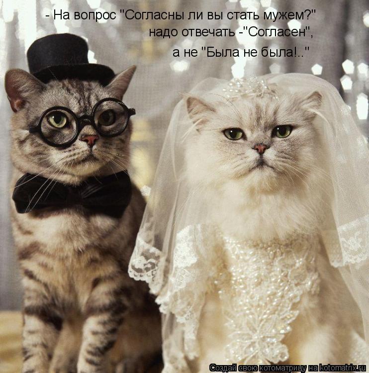 """Котоматрица: - На вопрос """"Согласны ли вы стать мужем?"""" надо отвечать -""""Согласен"""", а не """"Была не была!.."""""""