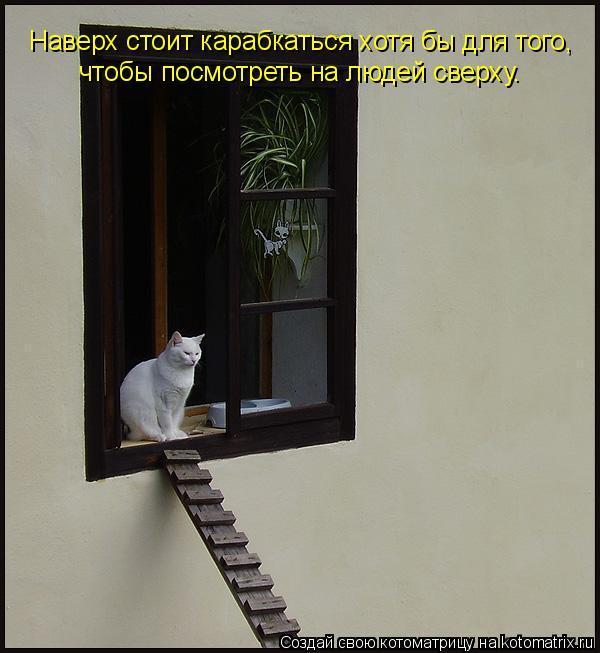 Котоматрица: Наверх стоит карабкаться хотя бы для того,  чтобы посмотреть на людей сверху.
