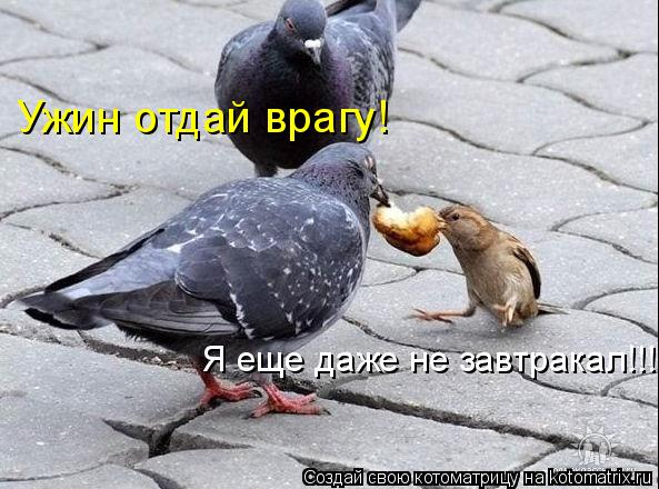 Котоматрица: Ужин отдай врагу! Я еще даже не завтракал!!!