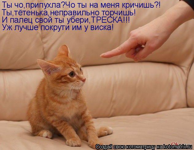 Котоматрица: Ты чо,припухла?Чо ты на меня кричишь?! Ты,тётенька,неправильно торчишь! И палец свой ты убери,ТРЕСКА!!! Уж лучше покрути им у виска!