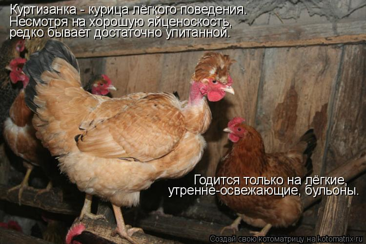Котоматрица: Куртизанка - курица лёгкого поведения. Несмотря на хорошую яйценоскость,  редко бывает достаточно упитанной. Годится только на лёгкие, утре