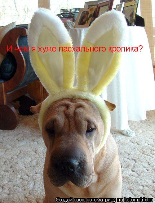 Котоматрица: И чем я хуже пасхального кролика?