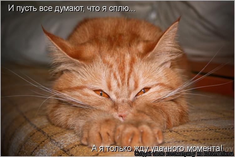 Котоматрица: И пусть все думают, что я сплю... А я только жду удачного момента!