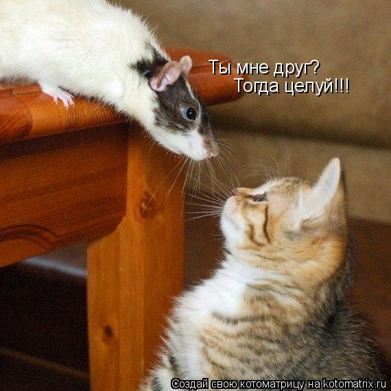 Котоматрица: Ты мне друг? Тогда целуй!!!