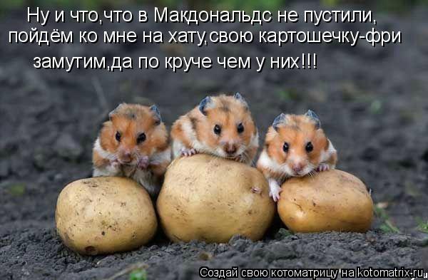 Котоматрица: Ну и что,что в Макдональдс не пустили, замутим,да по круче чем у них!!! пойдём ко мне на хату,свою картошечку-фри