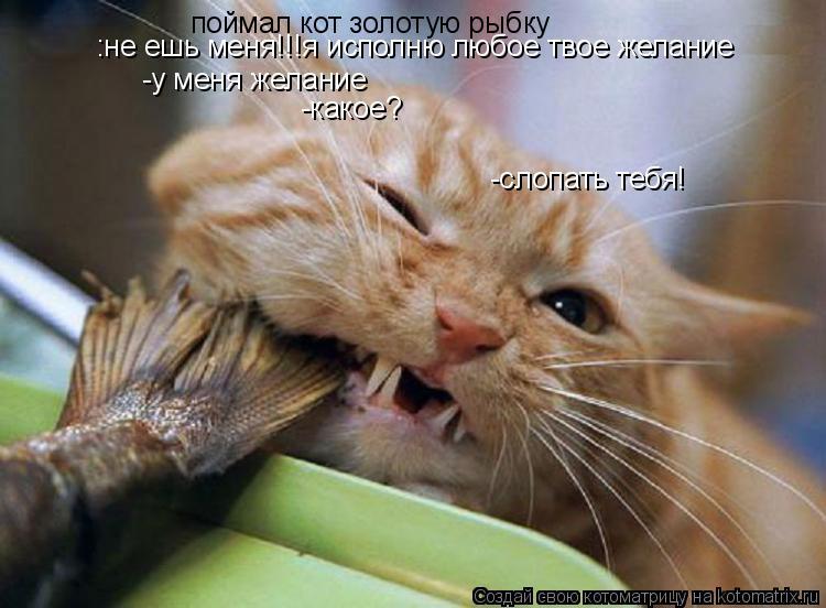 Котоматрица: поймал кот золотую рыбку :не ешь меня!!!я исполню любое твое желание -у меня желание -какое? -слопать тебя!