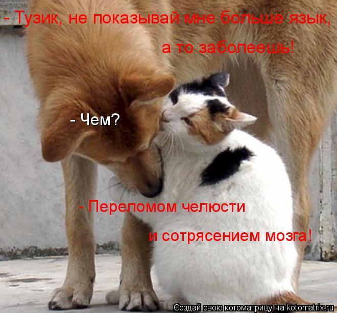 Котоматрица: - Чем? - Переломом челюсти и сотрясением мозга! - Тузик, не показывай мне больше язык,  а то заболеешь!