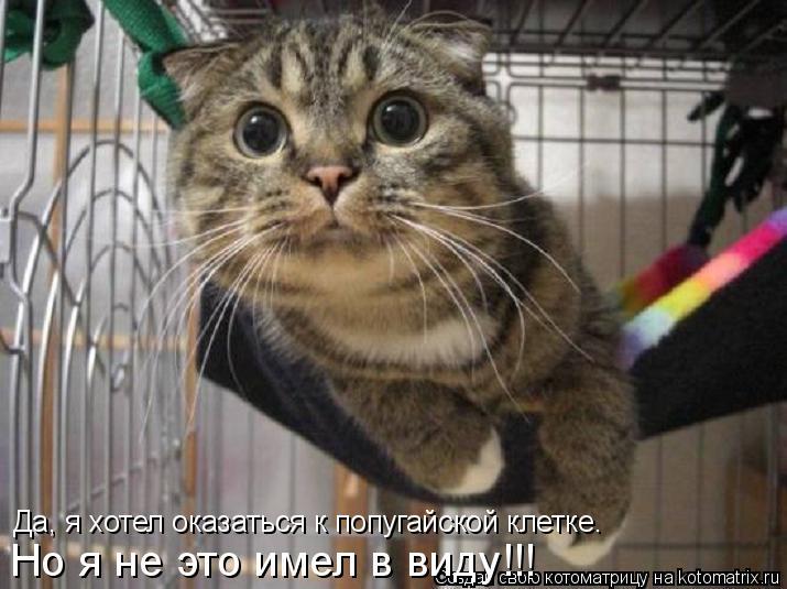 Котоматрица: Да, я хотел оказаться к попугайской клетке. Но я не это имел в виду!!!