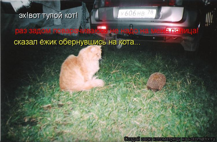 Котоматрица: эх!вот тупой кот! раз задом поварачиваюсь не надо на меня пялица! сказал ёжик обернувшись на кота...