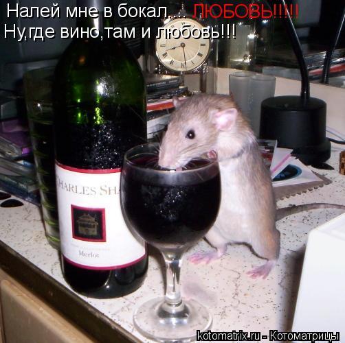 Котоматрица: Налей мне в бокал.... ЛЮБОВЬ!!!!! Ну,где вино,там и любовь!!!